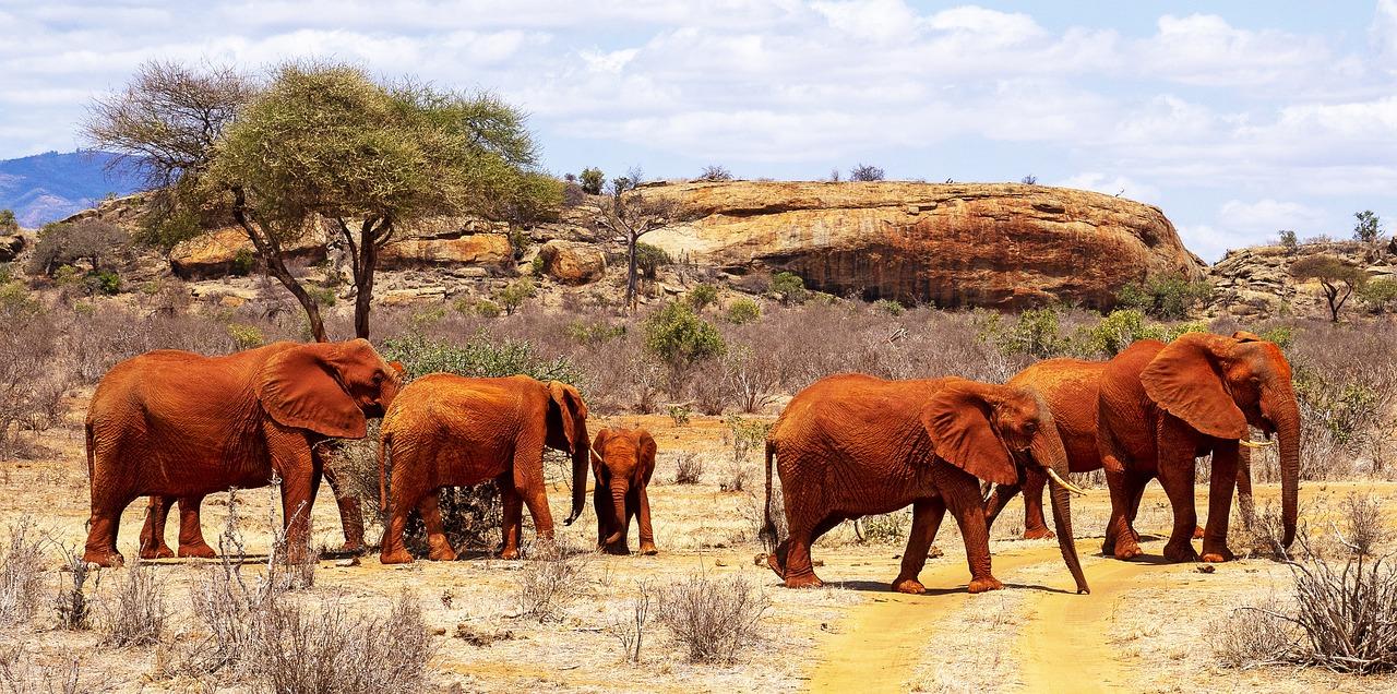 Rode olifanten Tsavo Kenia