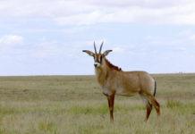 Ruma National Park Kenia