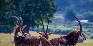 Shimba Hills National Reserve kenia