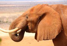 Tsavo East National Park Kenia