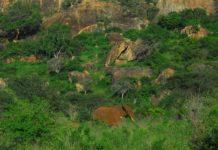 Tsavo West National Park Kenia