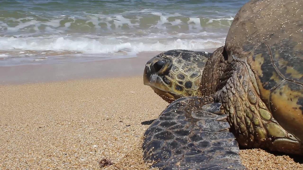 Watamu National Marine Park schildpad