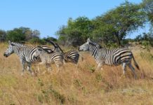 Kazuma Pan National Park Zimbabwe