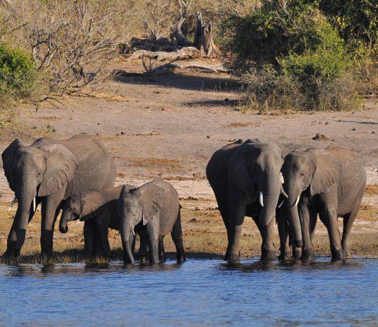 Liparamba Game Reserve Tanzania