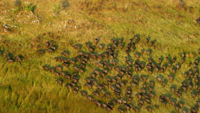 Moyowosi Game Reserve tanzania