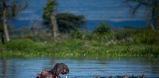 Ruvubu National Park Burundi