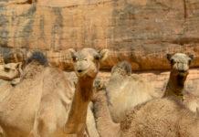 Wadi El Gemal National Park