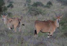 Burigi-Chato National Park Tanzania