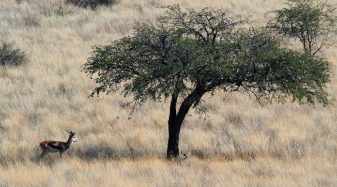 Dqae Qare Game Farm Botswana