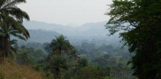 Gola Rainforest National Park