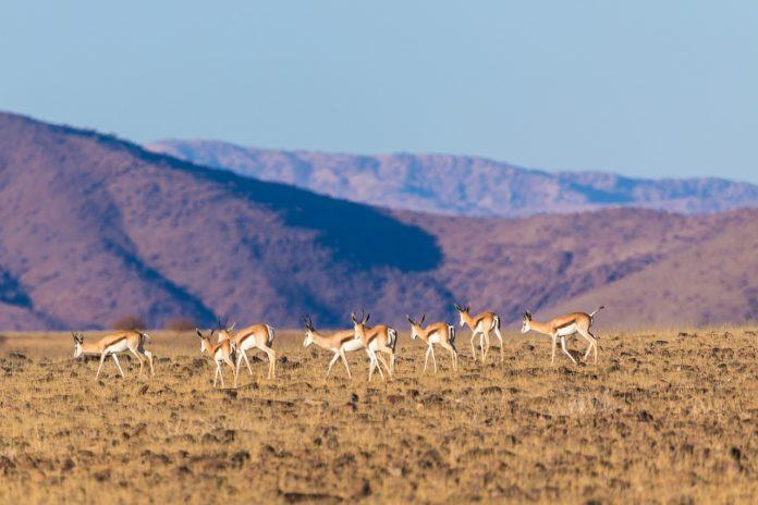 Mokala National Park Zuid Afrika